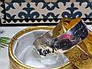 Блезік женский серебро 925пробы, фото 2