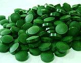 Хлорелла натуральная, 500 мг, 200 таблеток (Chlorella), Now Foods, фото 4