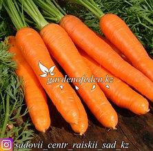 """Профессиональные семена. Морковь """"Берликум Роял""""."""