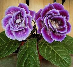 Комнатные растения и цветы