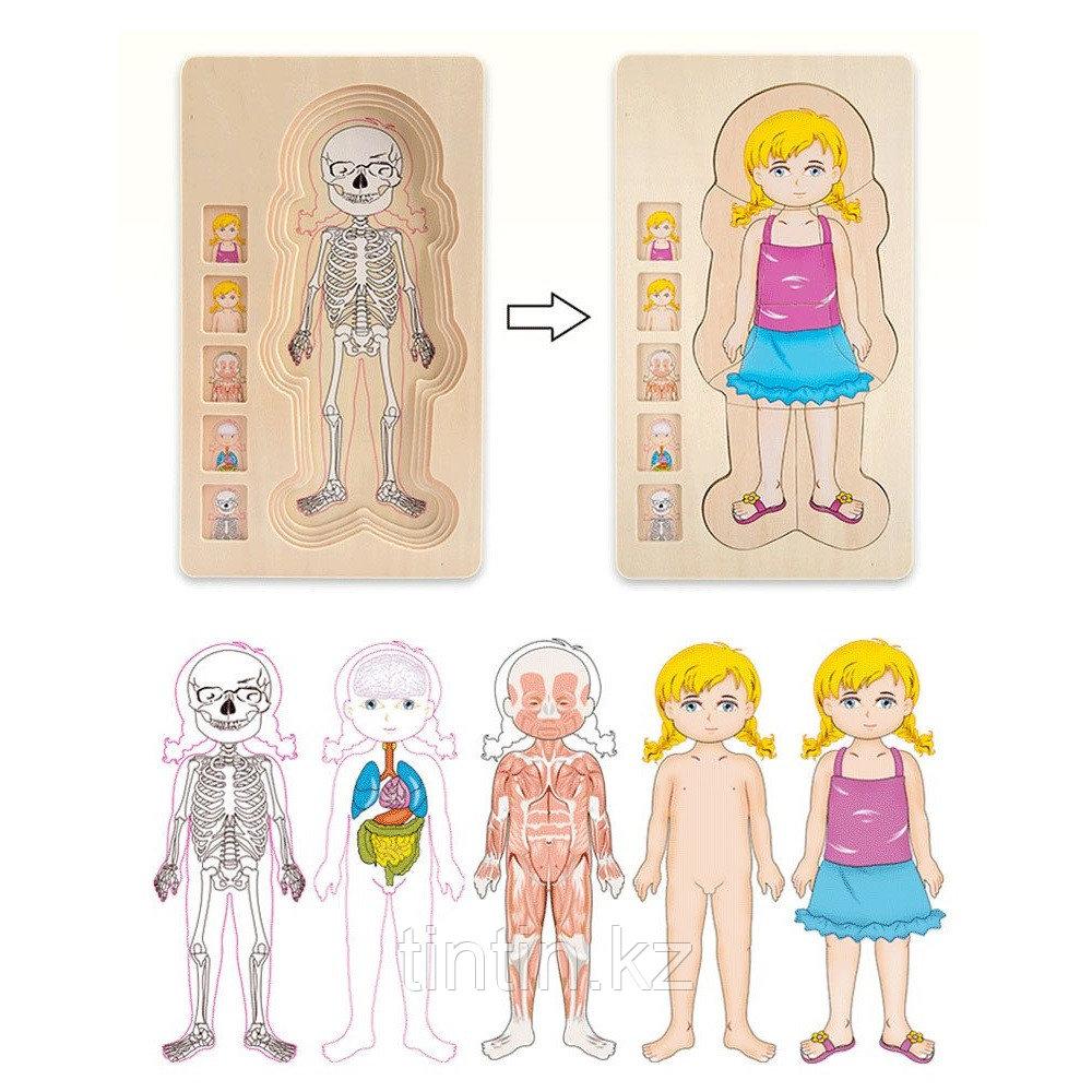 """Деревянный развивающий пазл """"Анатомия человека"""""""