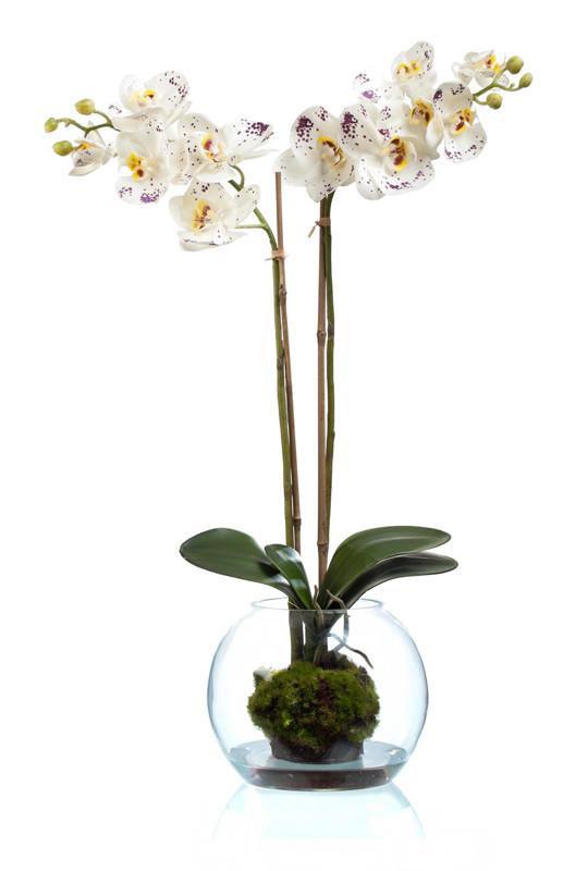 Орхидея фаленопсис (SRTOUCH) белая в стекле шаре (высота - 65см)