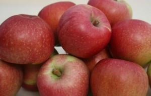 Яблоня сорт Кидс оранж ред