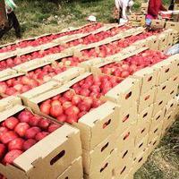 Коробки для яблок 435*282*140