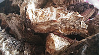 Ферула джунгарская омик