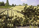 Деревянные опоры ЛЭП, деревянные столбы для линий электропередач (ЛЭП) и связи, фото 5