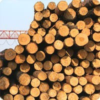 Деревянные опоры ЛЭП, столбы для линий электропередач и связи