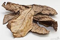 Листья миндального дерева
