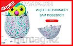 Hatchimals - Пингвинчик или Дракончик - интерактивный питомец, фото 4