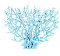 Коралл голубой большой