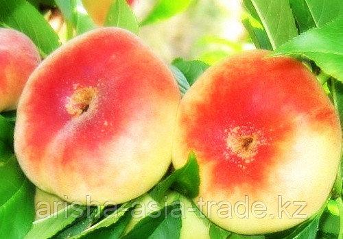 Саженцы инжирного персика Владимир