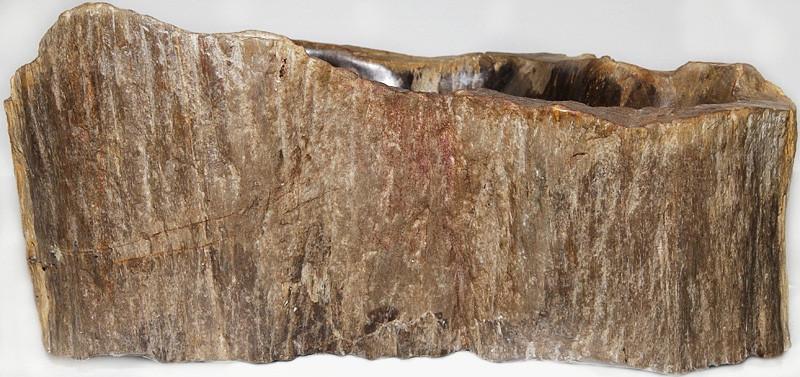 Раковина из окаменелого дерева Fossil большая